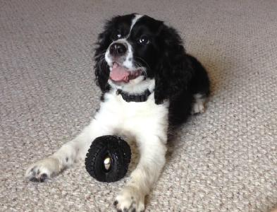 Sarver's Pup